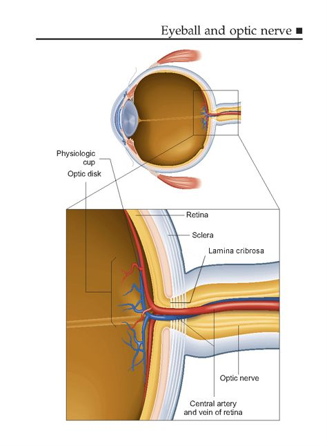 Glaucoma and the Optic nerve